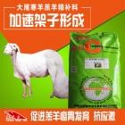 大尾寒羊羔羊育肥专用精补料 羔羊成长饲料 颗粒料 长势好肥的快