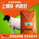 杜泊羊浓缩料 杜泊羊浓缩饲料 杜泊羊长肉长膘肥的快专用浓缩料
