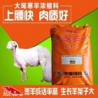 大尾寒羊后期快速育肥催肥长肉增重用浓缩饲料 大尾寒羊浓缩料 大尾寒羊饲料