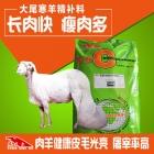 大尾寒羊快速催肥精补料 大尾寒羊饲料 精补料 大尾寒羊长肉快增重上膘