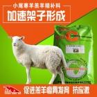 小尾寒羊羔羊专用精补料 糕羊育肥饲料 羊羔预混料 催架子